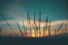 Silhouette of Grass Under Sunset Royalty Free Stock Photos