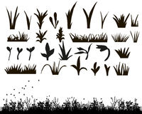 Silhouette of grass. Vector, isolated, silhouette of grass Stock Photos