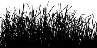 Silhouette grass. Royalty Free Stock Photography