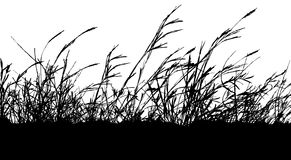 Silhouette grass. Royalty Free Stock Photo