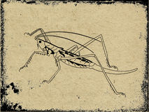 Silhouette grasshopper Stock Images
