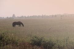 Grazing Horse. Royalty Free Stock Images