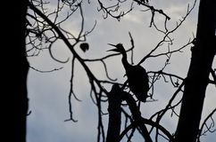 Silhouette of Great Blue Heron Stock Image