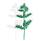 Silhouette of a green plant Stock Image