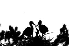 Silhouette of Grey Heron large chicks in the nest Royalty Free Stock Photos