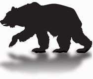 Silhouette of a grizzly bear with a shadow Stock Image