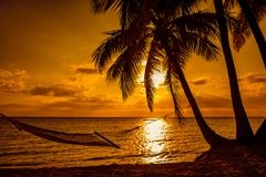 Silhouette of hammock and palm trees on a tropical beach at suns stock image
