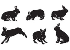Silhouette of hares Stock Photography