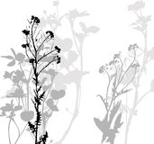 Silhouette of herbs and flowers Stock Images