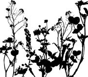 Silhouette of herbs and flowers Stock Photography
