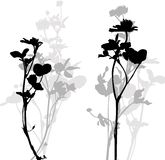 Silhouette of herbs and flowers Royalty Free Stock Images