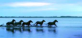 Silhouette of a Herd of Horses Running Through the Water. Silhouette of a herd of white horses running through the water - texture effect placed over the image royalty free stock image