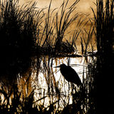 Silhouette of a heron Stock Photography