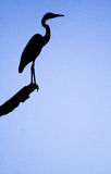 A silhouette of a heron Royalty Free Stock Photos