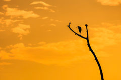 Silhouette of heron standing on dead branch Royalty Free Stock Images