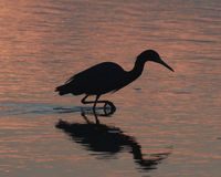 Silhouette of Heron at Sunset Stock Images