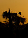 Silhouette of heron Royalty Free Stock Image