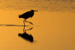 Silhouette of heron Stock Photos