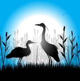 Silhouette of herons in the marsh Royalty Free Stock Photos