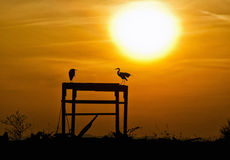 Silhouette of Herons Royalty Free Stock Photos