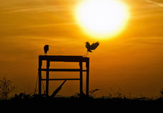 Silhouette of Herons. At Sunset Stock Photography