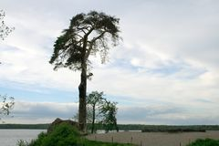 silhouette of high lonely pine on the shore of the Bay in Karelia stock photos