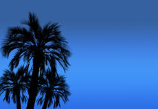 Silhouette of high palm trees with night sky background. Stock Photo