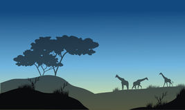 Silhouette of hills and giraffe Stock Photos