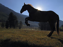 Silhouette of Hobbled Horse Royalty Free Stock Photos