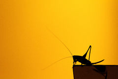 Silhouette hopper Stock Photo