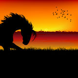 Silhouette of a horse. View of silhouette of a horse Stock Photos