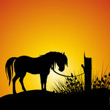 Silhouette of horse. Silhouette view of a horse Stock Image