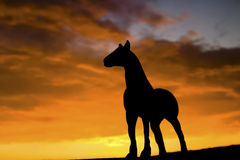 Silhouette of Horse Royalty Free Stock Photography