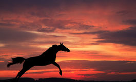 Silhouette of a horse. In a jump against the sky on a sunset Stock Photography