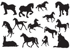 Silhouette of horse. royalty free stock image