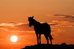 Silhouette of horse Royalty Free Stock Image