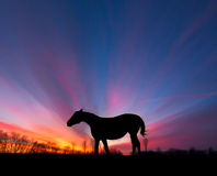 Horse Silhouette Sun Rays Royalty Free Stock Image
