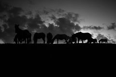 Silhouette of horse against the sky. black and white. Beautiful silhouette of the horse in black and white Stock Image