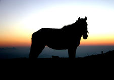 Silhouette of horse against sunset Stock Image