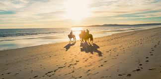 Horse back riders at Limantour Beach with sunset. royalty free stock photo