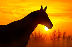 Silhouette of a horse on a background of sky at sunset. Silhouette of a horse on a background of orange sky at sunset royalty free stock photos