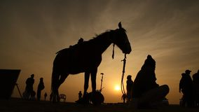 Silhouette of Horse in the desert stock video