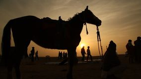 Silhouette of Horse in the desert stock video footage