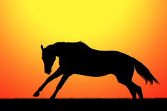 Silhouette of horse Stock Images