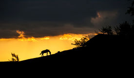 Silhouette of a horse on a hill Stock Photo