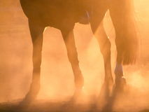 Silhouette of horse legs during sunset. Silhouette of horse legs and rider during sunset Royalty Free Stock Images