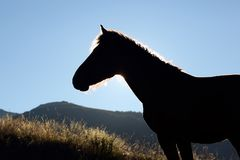 Silhouette of a horse in the mountains in the sun. The silhouette of a horse in the mountains in the sun Stock Photography