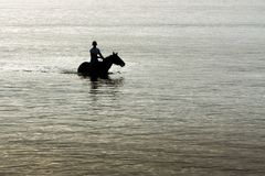 Silhouette of horse and rider in ocean. Royalty Free Stock Photo