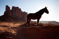 Silhouette of horse standing in front of desert mesa. Lone horse in profile silhouette standing on sand in Navajo desert Royalty Free Stock Photos