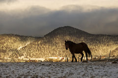 Silhouette of a horse in a sunrise landscape with mountain in ba Stock Photography